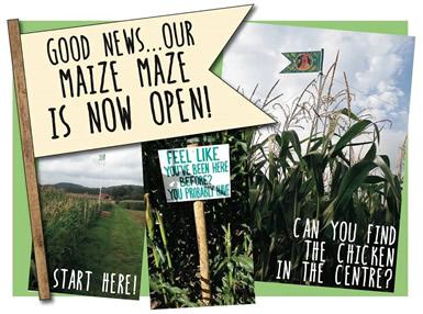 Maize maze now open